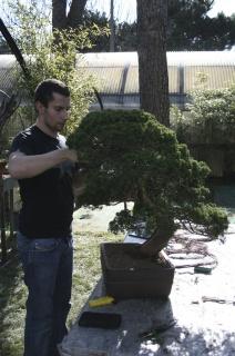 potatura - concimazione - rinvaso bonsai