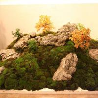 bonsai composizione