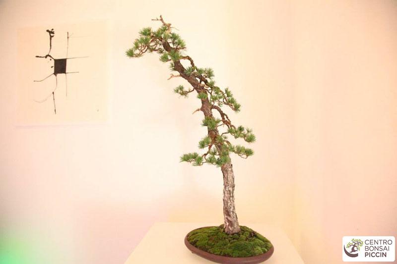 bonsai mostra