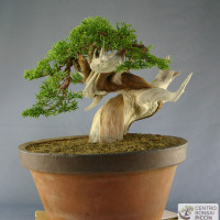bonsai shoin